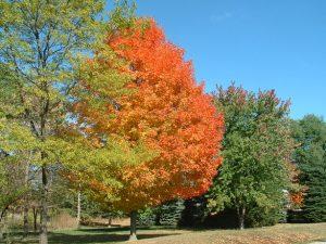 michigan-autumn-1342145